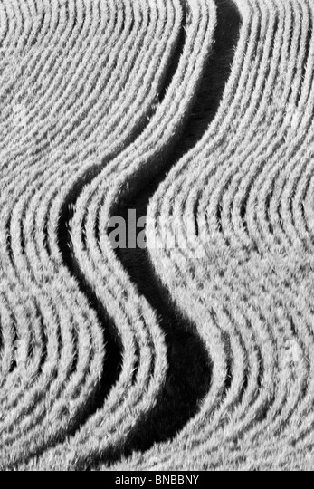 Planting lines in wheat field. The Palouse, Washington - Stock-Bilder