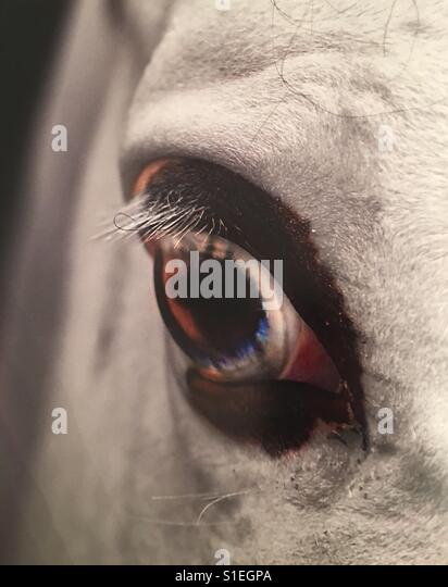 Window to the Soul - Stock Image
