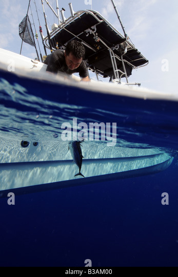 Skipjack tuna stock photos skipjack tuna stock images for B liner fish