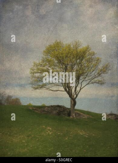 Single green tree standing on hill - Stock Image