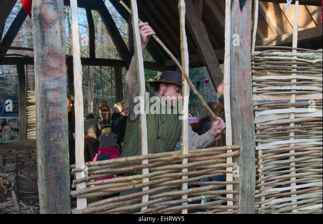Installing hazel wattle in the wall of building for wattle and daub construction - Stock Image