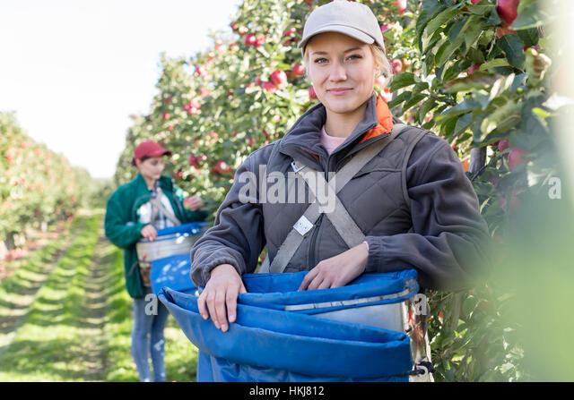 Portrait smiling female farmer harvesting apples in orchard - Stock-Bilder