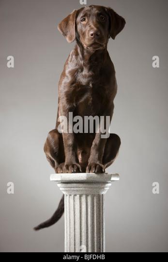 dog on a pedestal - Stock Image