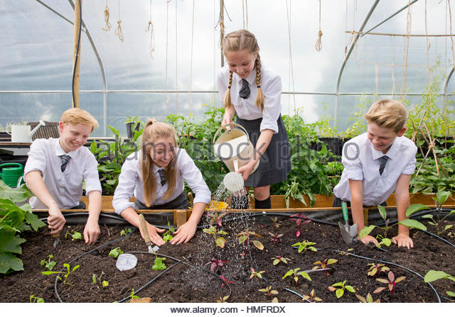 Middle school students with watering can watering plant seedlings in greenhouse - Stock-Bilder