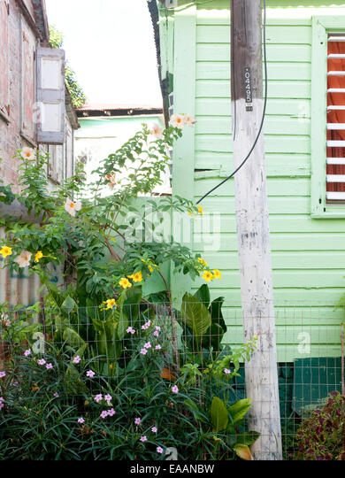 detail of tropical houses and plants in the  Carribbean - Stock-Bilder