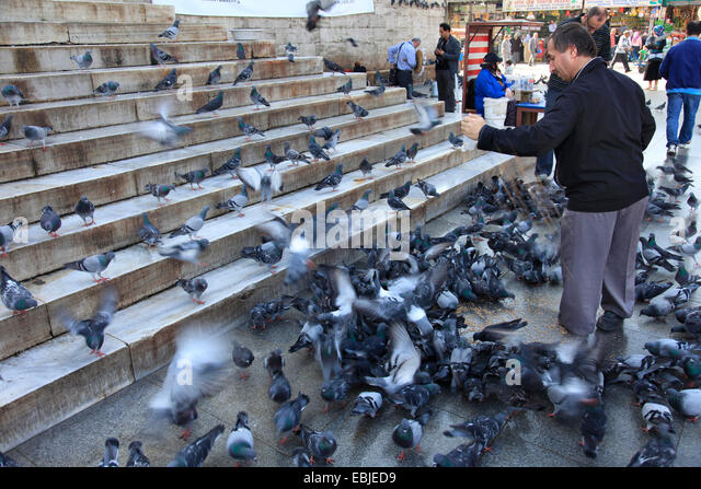 pigeon plague in our cities' They are a plague to human health and the  the most harmful animals to the ecosystem and human  the most harmful animals to the ecosystem and human health.