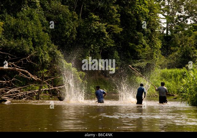 Amazon fish stock photos amazon fish stock images alamy for Amazon fishing net