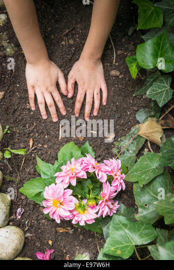 Girl gardening, planting flowers with care - Stock Image