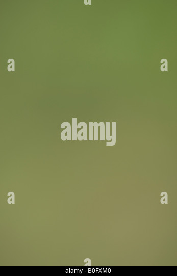 Green background - Stock-Bilder