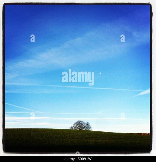 Tree on horizon - Stock Image