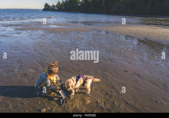Girl with golden retriever puppy dog digging on beach - Stock Image