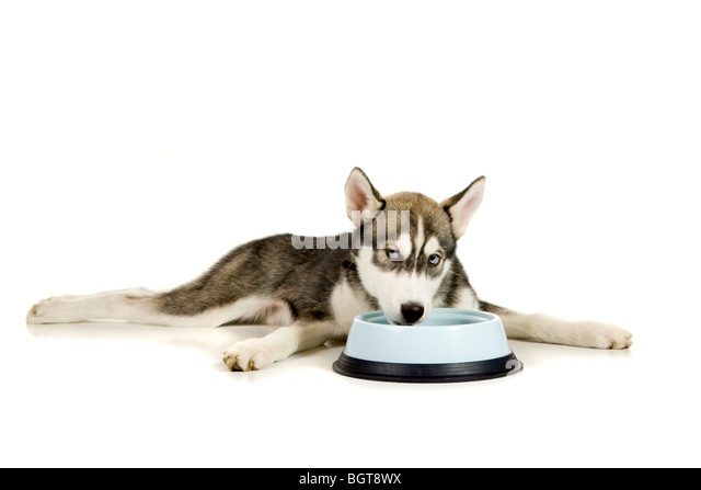 Meal time - Stock Image
