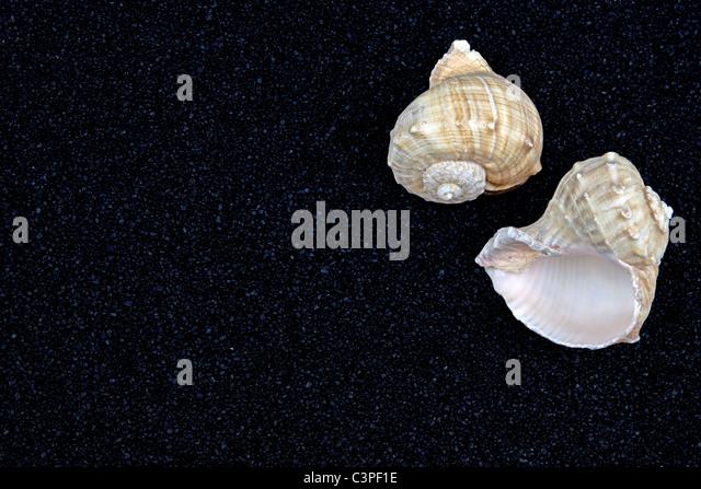 two seashells on black sand - Stock-Bilder