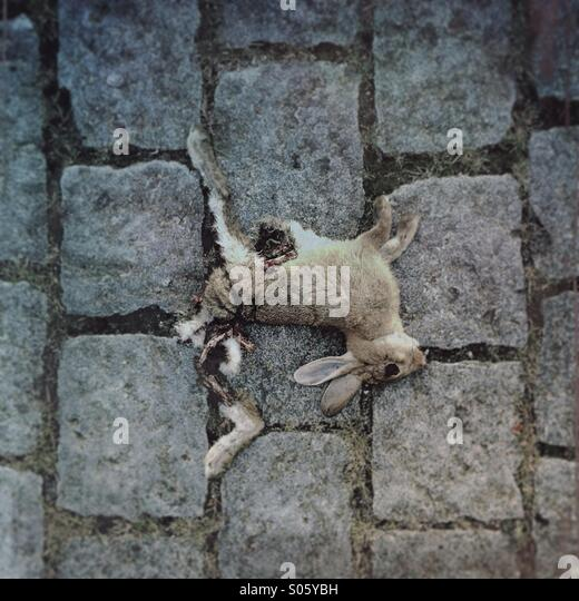 Dead rabbit, road kill on urban street. - Stock Image