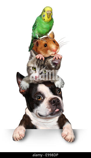 Group of pets concept as a dog cat hamster and budgie standing on top of eath other as a symol for veterinary care - Stock-Bilder