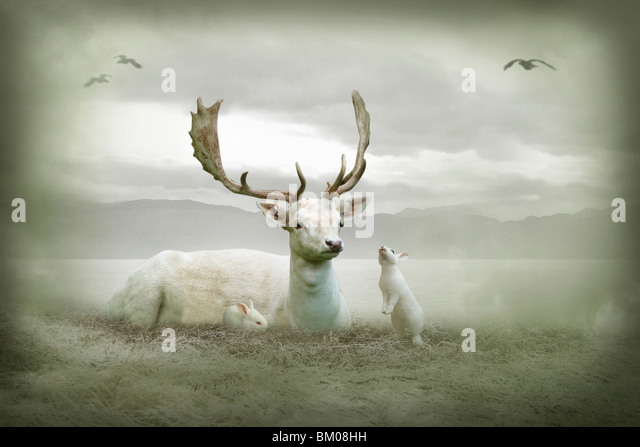 White stag sitting with white rabbits - Stock Image