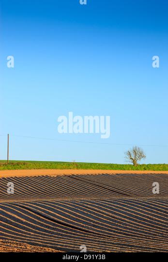 Newly planted potato field Pembrokeshire Wales - Stock Image