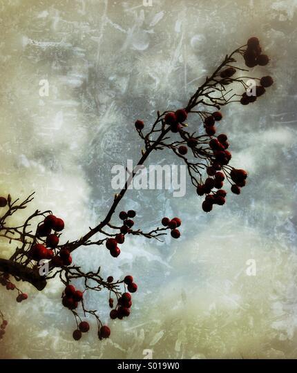Wild berries grunge texture - Stock-Bilder