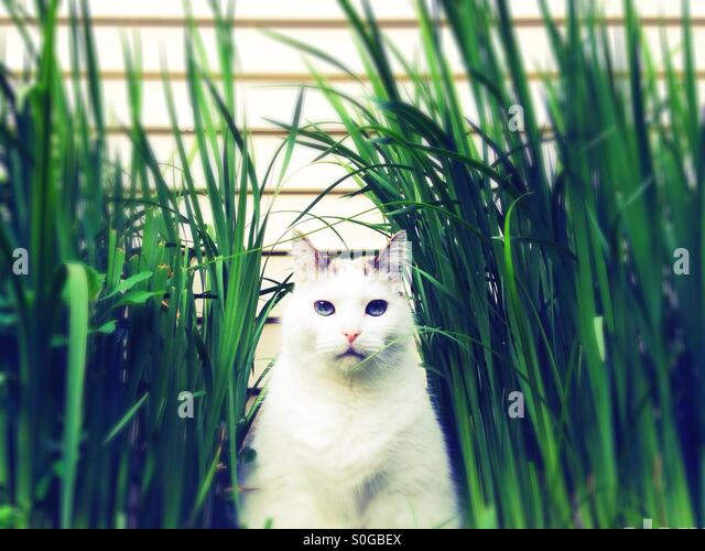 A cat sitting in tall grass next to a house. - Stock Image