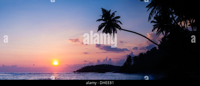 Palm tree at sunset on tropical Mirissa Beach, South Coast of Sri Lanka, Southern Province, Sri Lanka, Asia - Stock Image