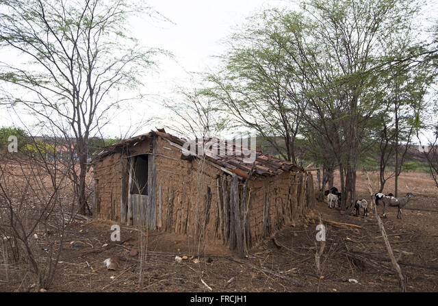 House of wattle and daub - region of the Pajeú Brushland - Stock Image