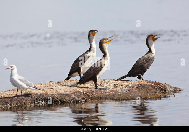lake cormorant christian singles Christian heartland opens window into fight for china's  pegged to another wall is a single wooden cross,  ksl broadcasting salt lake city ut .