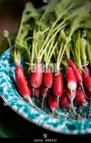 Fresh radish on plate - Stock Image
