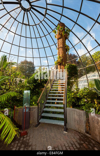 Inside the tropical rainforest glasshouse at the Zurich botanical gardens. - Stock Image