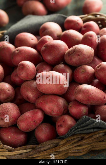 Raw Organic Red Potatoes Ready for Cooking - Stock Image