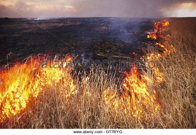 Bushfire near Masai Mara Reserve Kenya Masai Mara Reserve Kenya - Stock Image