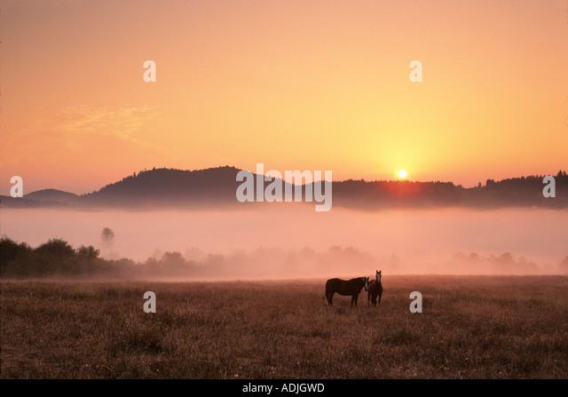 Horses at sunrise Near Monroe Oregon - Stock-Bilder