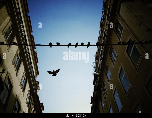 Birds on a wire - Stock Image
