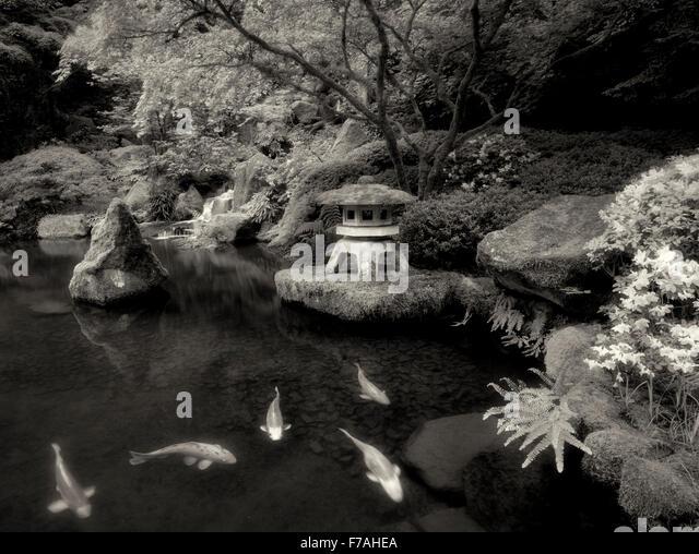 Koi in pond with Japanese lantern and waterfalls. Japanese Gardens. Portland, Oregon - Stock Image