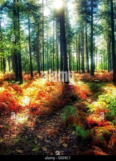 Sunlight forest - Stock Image