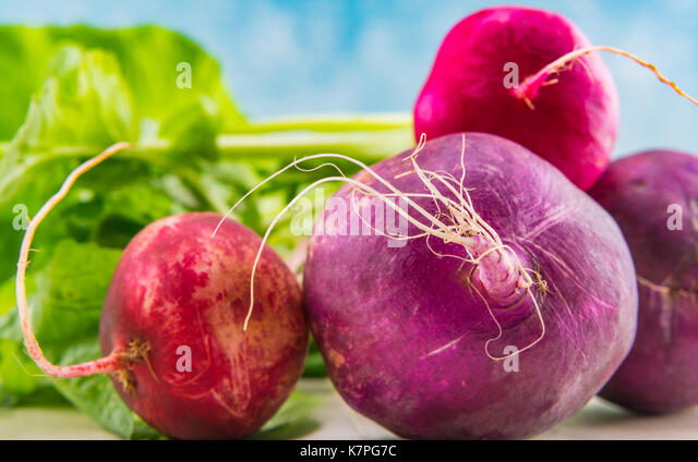 Close Up of Purple and Red Radishes on their sides - Stock Image