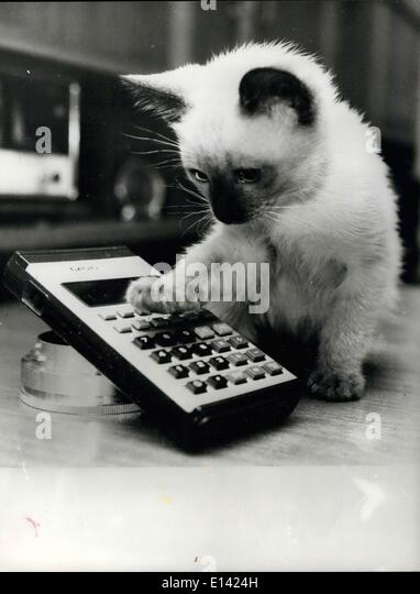 Mar. 31, 2012 - The Kitten on the : Picture Shows: ''BOBO'' the kitten decides to make use of the - Stock Image