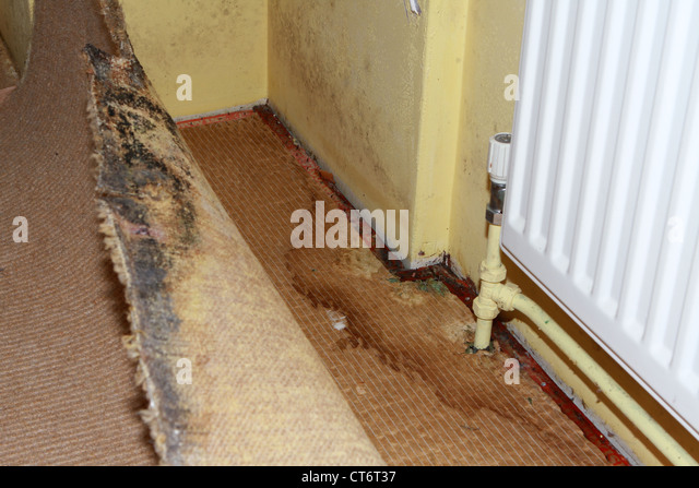 Does Building Insurance Cover Damp