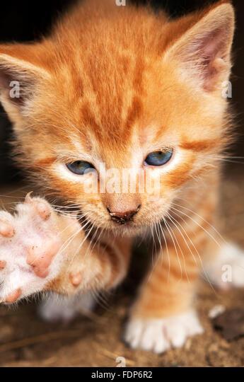 Kitten attack - Stock Image