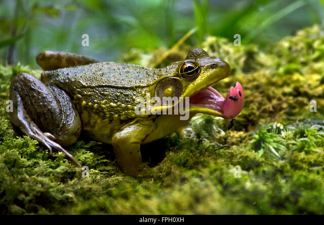 Catching Up With Newt >> Reptiles And Amphibians Stock Photos & Reptiles And Amphibians Stock Images - Alamy