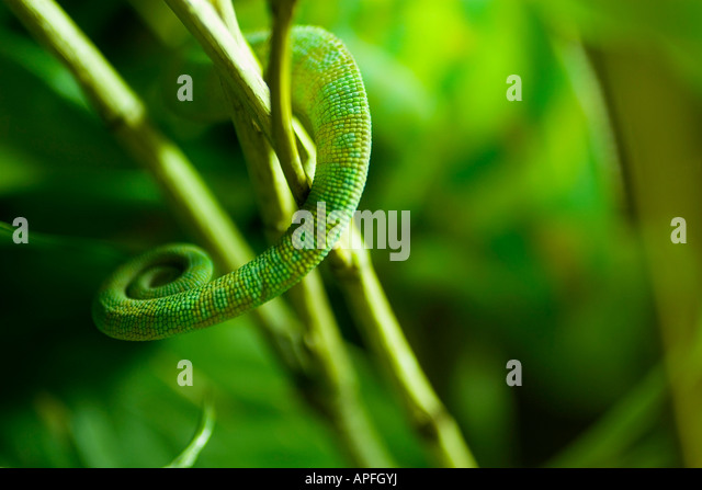 Lizard tail - Stock Image
