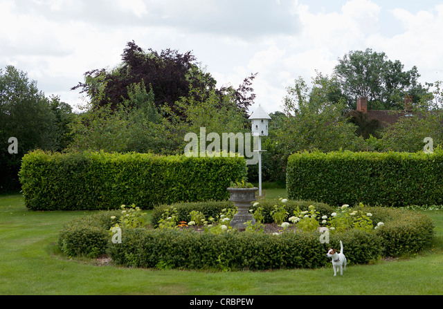 Dog playing in lanscaped garden - Stock Image