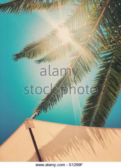 Parasol, Sun & Palm Tree - Stock Image