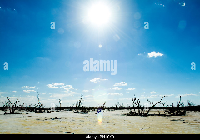Dead tree trunks and limbs on a white salt lake under blue sky - Stock Image