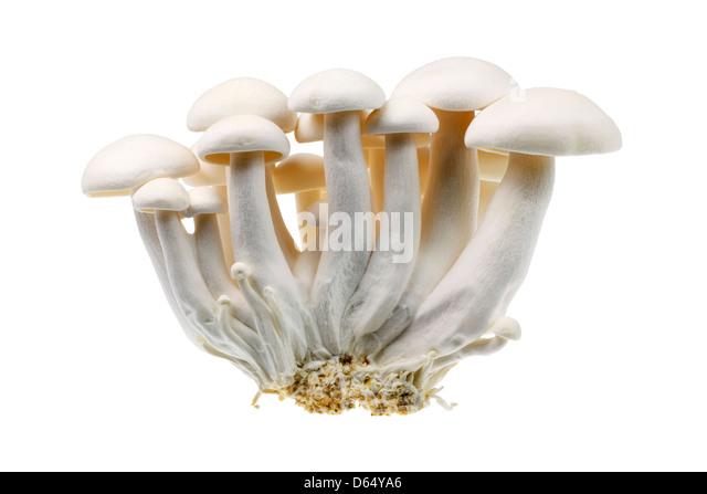White shimeji mushrooms - Stock Image