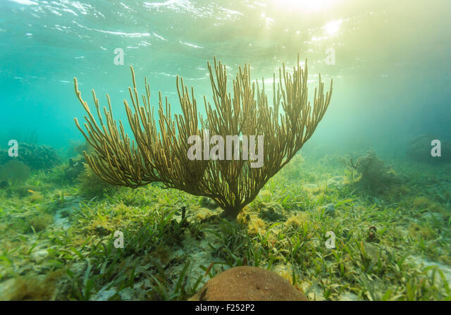 sunset underwater on coral reef - Stock Image