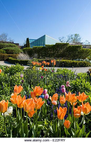 Tulips in the Beryl Ivey Knot Garden at the Toronto Botanical Garden in Edwards Gardens in Toronto Ontario Canada - Stock Image