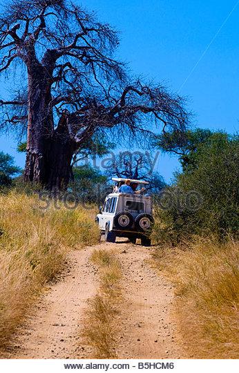 Tourists on safari peer out of the pop up roof of a safari vehicle Tarangire National Park Tanzania - Stock Image