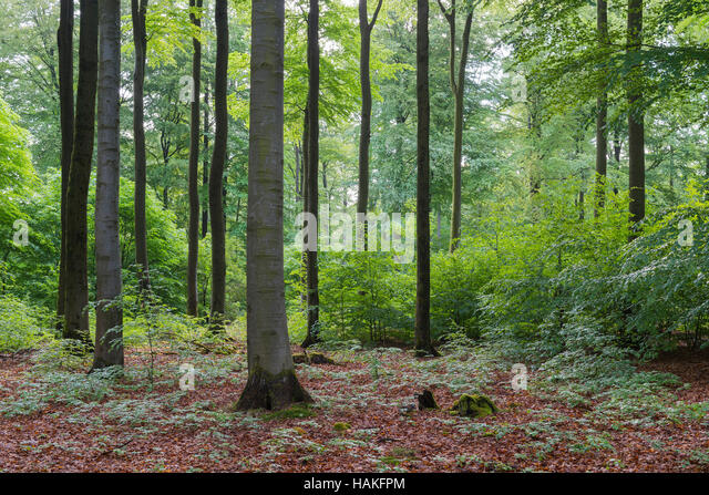 Forest in Spring, Weibersbrunn, Spessart, Bavaria, Germany - Stock Image
