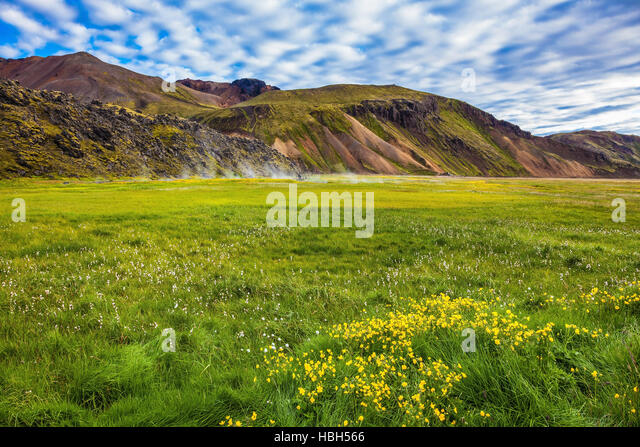 Geothermal soars among the grass - Stock Image
