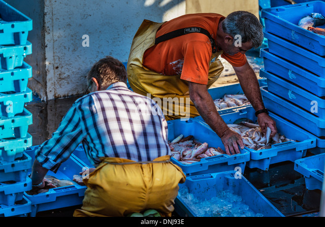 Fisherman sort their catch for market, Palamos, Spain - Stock Image